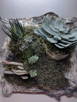 With preserved moss & artificial cactuses & suculents