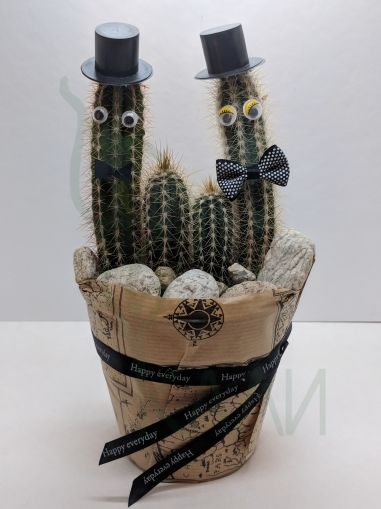 Family Cactuses
